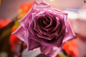 Shadow of Roses ~薔薇時間への誘い