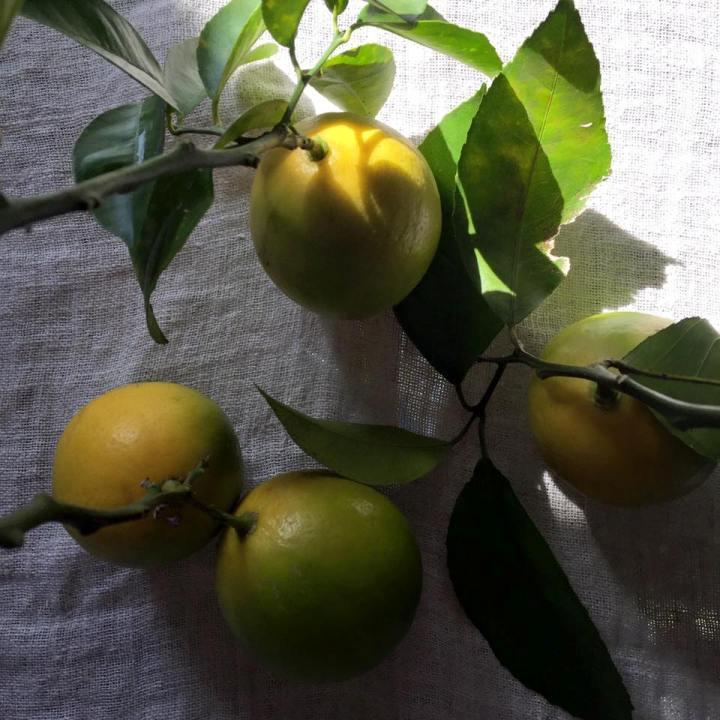 檸檬のお菓子